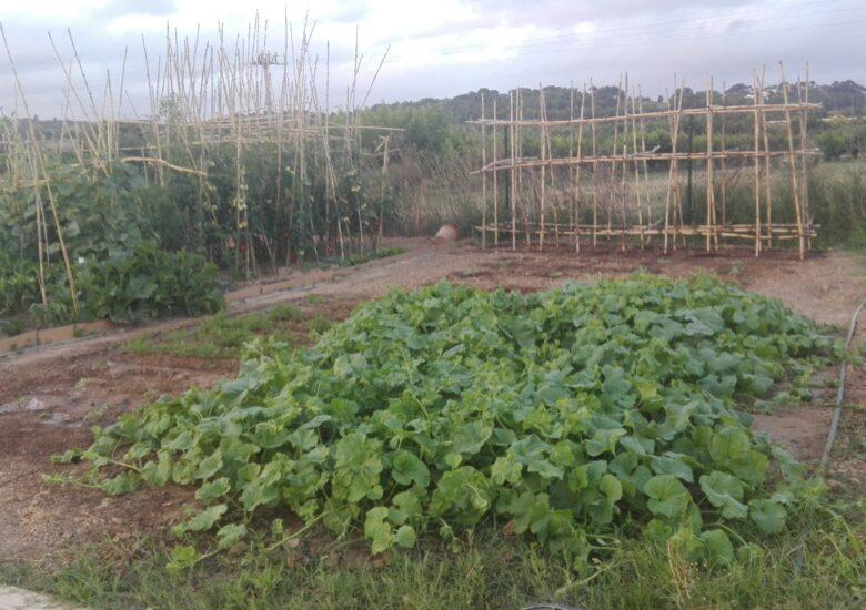 donació empowerment hortícola
